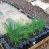 Build a raised bottle bed