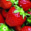 Fruits and berries: The basics of growing at home