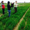 Culture of the Land workshop connects school teachers to local grain research