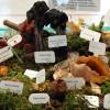 Mushroom varieties on  display at fall shows, events
