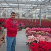Poinsettias: 75,000 plants growing at Van Wingerden Greenhouse