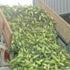 Small farms make big impact on food bank