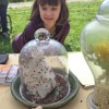 A bug's life: A look at who's who in the garden