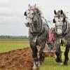 International Plowing Match celebrates 75 years