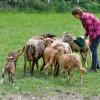 OUR FARM: Baldham Farm