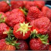 Strawberry festivals: 80th annual Berry Dairy Days and more this month