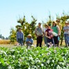 Public invited to tour research plots during annual WSU Field Day