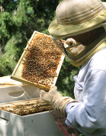beekeeping backyard basics grow northwest