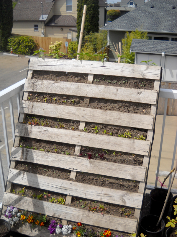 Pallet projects reuse every inch of space grow northwest - Reusing pallets in the garden ...