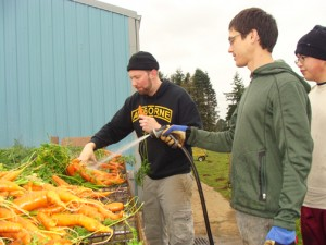 Sustainable Resource Coordinator Daniel Nessly, Mission Continues Fellow Justin Blotsky, and Hengyang Zhi, a foreign exchange student from China who goes by the name Ambrose, work on the carrot harvest together at the Growing Veterans farm. PHOTO BY BECCA SCHWARZ COLE