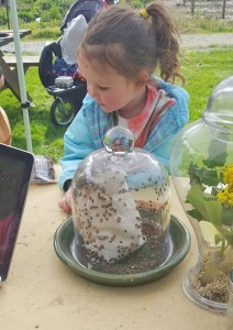 Young visitors explore the bug displays, including ladybugs and lacewings, during Kidz and Bugs at the Chuckanut Center. COURTESY PHOTO