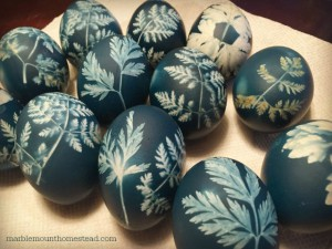Final dyed eggs with leaf prints. PHOTO BY CORINA SAHLIN