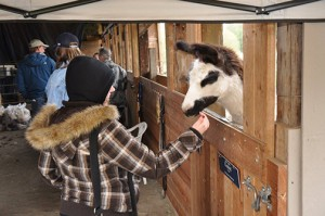 Kuklenski said the workshop is a success because it is purely educational; there are no animal sales or farm promotions. Donations cover costs. Photo courtesy of JNK Llamas