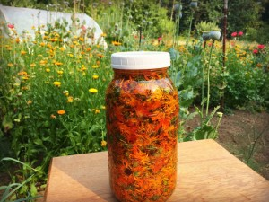 To make the infused oil, pick calendula blooms when bright and open. Dry the flowers or purchase dried blooms and fill a jar with the dried blooms and olive oil (above). Shake well and let sit for 4-6 weeks in a sunny window.  COURTESY PHOTOS