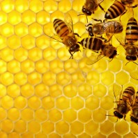 honeycomb-198x198